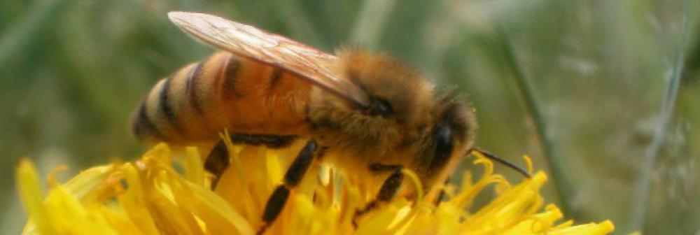 PČELARSTVO FRKETIĆ
